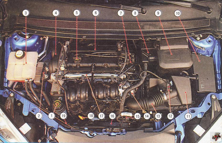 Подкапотное пространство автомобиля Форд Фокус 2 с двигателем 1,6 л Duratec Ti-VCT (вид сверху)